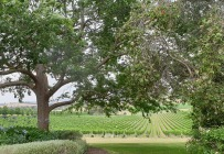 yarra-valley-winery-tour-4
